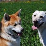 Concurso de perros en Nerja